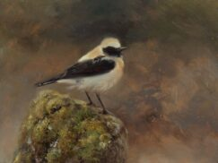 Gray Wheatear oil painting