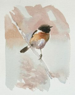 Stonechat watercolor
