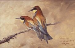 Bee eater (Merops apiaster) painting