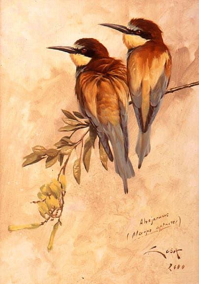 Abejaruco común ( Merops Apiaster )