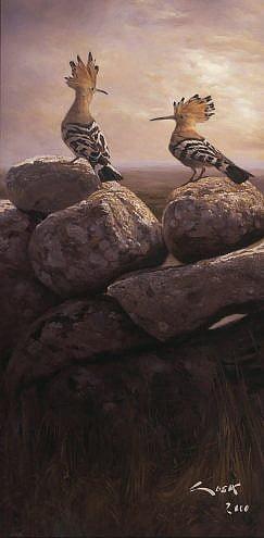 Cuadro de Abubilla (Upupa epops)