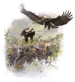 Imperial Eagle in the nest, painting