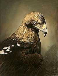 Iberian imperial eagle (Aquila adalberti) painting