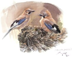 European Jays painting