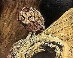 Eastern Screech Owl painting