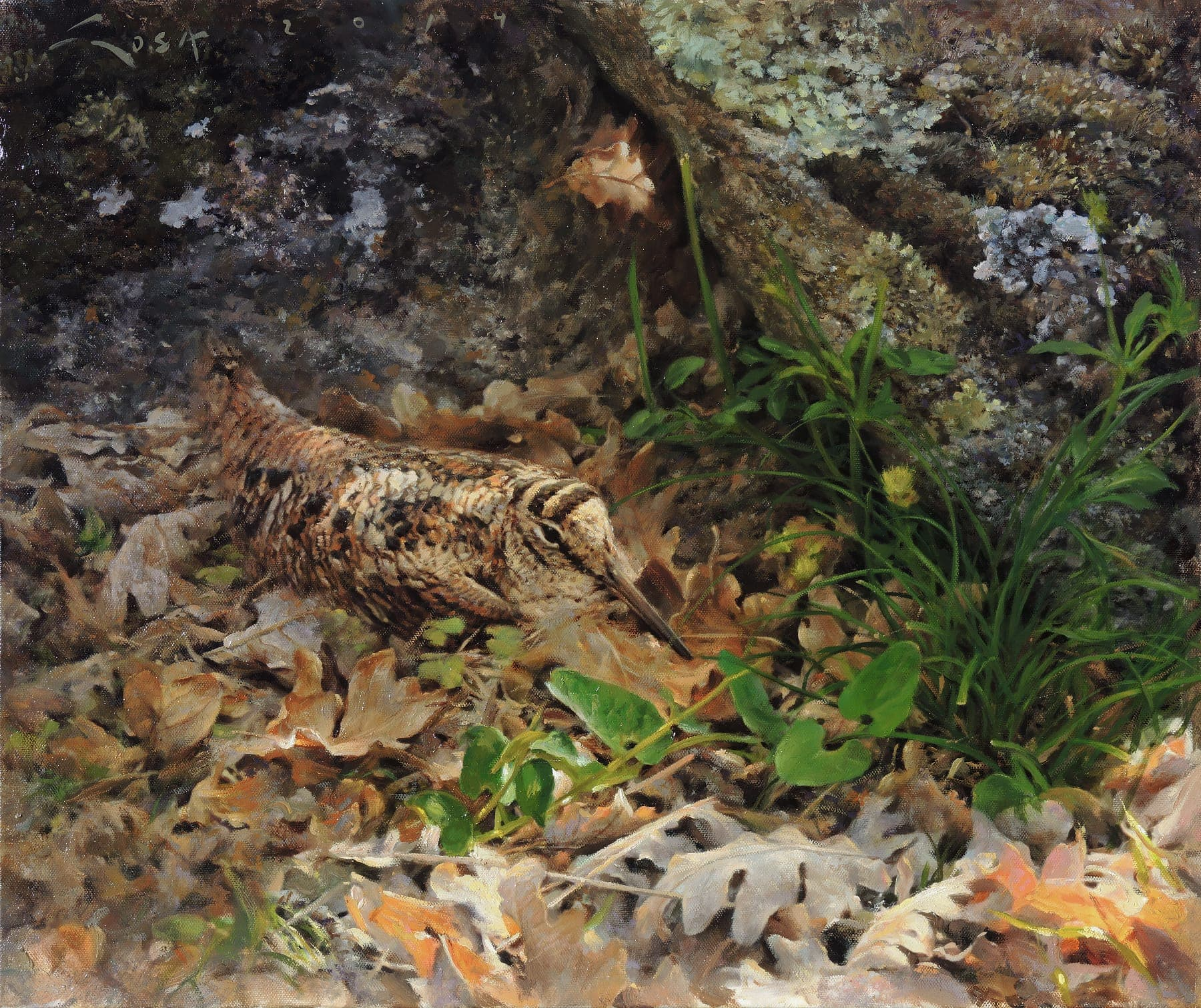 Oil Painting of a Woodcock (Scolopax rusticola)