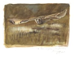 Short eared Owl painting