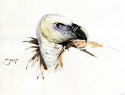 Griffon vulture painting