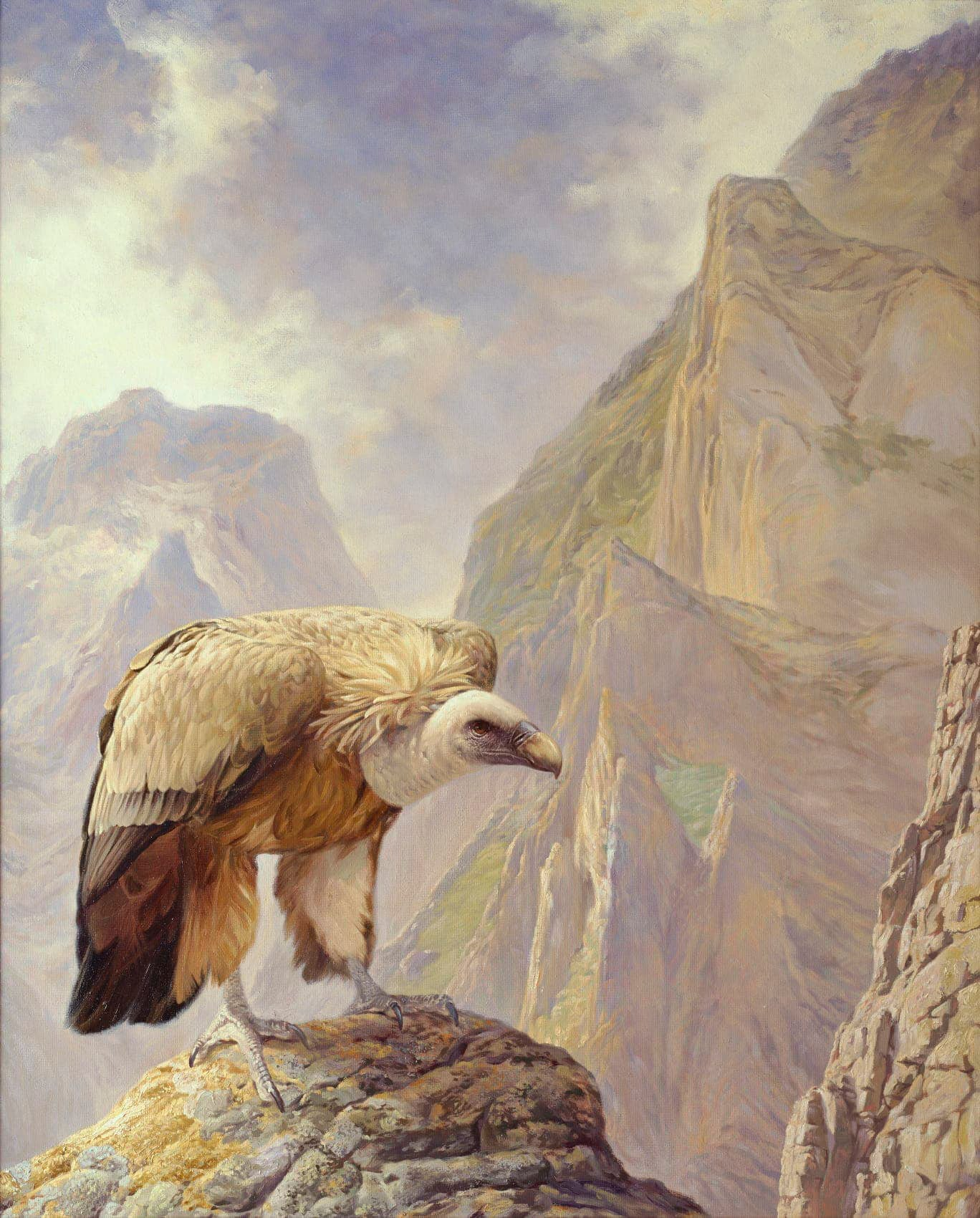 griffon vulture  gyps fulvus  paintings  the sentinel