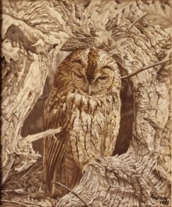 Tawny Owl (Strix aluco) painting