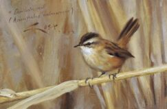 Moustached Warbler painting