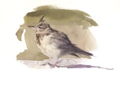Painting of a Crested lark