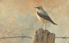 (Oenanthe oenanthe) painting