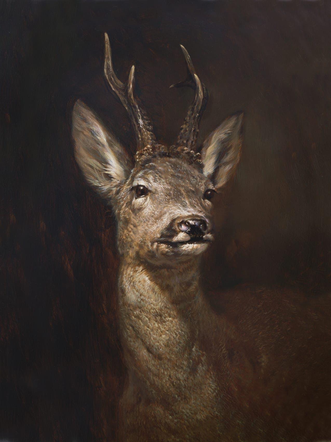 Roe Deer (capreolus capreolus) picture