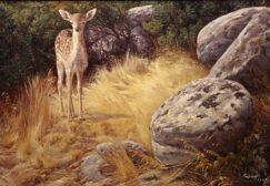 Young deer painting