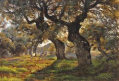 Cranes and Spanish Holm oaks picture