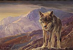 Wolf painting - Wolves paintings