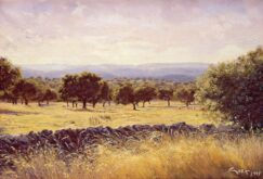 evergreen oaks - Extremadura - Spain - picture