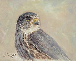 Cuadro de un Esmerejón (Falco columbarius)