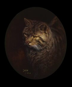 Wild Cat (Felis silvestris) picture