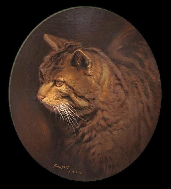 Cuadro de Gato montes (Felis silvestris)
