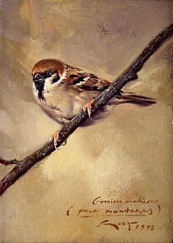 Eurasian Tree Sparrow (Passer montanus) painting