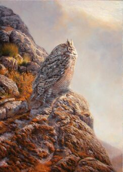 Great Horned Owl ( Bubo virginianus ) picture