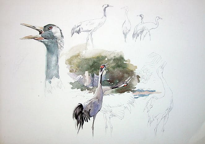 Cranes painting