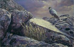 Peregrine falcon oil painting