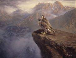 Halcones peregrinos. Sierra de Guadarrama. (Falco peregrinus)