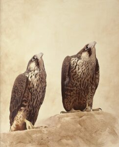 Peregrine falcon (Falco peregrinus) oil painting