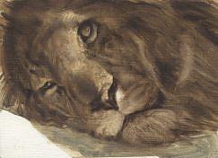 Cuadro de Leon (Panthera leo)