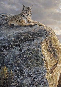 Iberian Lynx painting