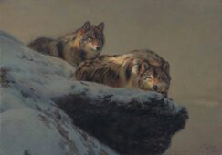 Painting of two wolves resting in the snow