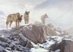 Painting of three wolves. Wolf painting