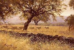 Ovejas merinas - Dehesa de Caceres