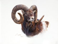 Mouflon paintings