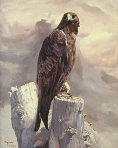 Golden Eagle (Aquila chrysaetos) painting