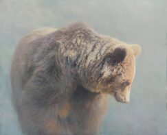 Brown Bear ( Ursus arctos ) picture. In the fog