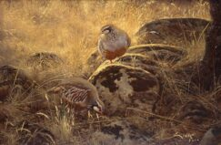 Partridges in September painting