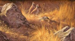 Painting of partridges