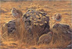 Painting of red partridges and thistles