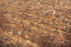 Partridge chicks painting