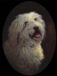 Portrait of a Catalan Sheepdog Dog ( Canis familiaris )