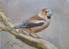 Hawfinch painting