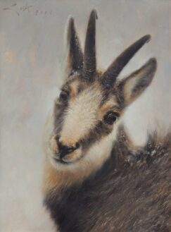 oil painting of a Chamois