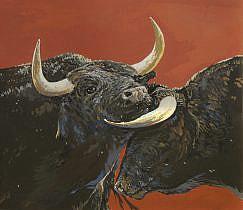 Bull (Bos primigenius taurus)