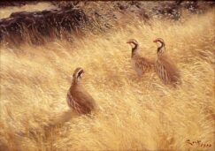 oil painting of three red partridges among the grass.