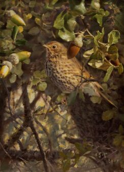 Painting of a Common Thrush (Turdus philomelos)